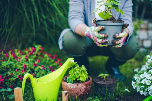 Money-Saving Tips for Gardening & Landscaping